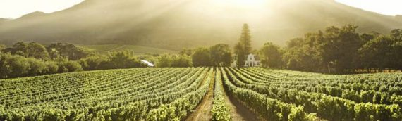 May Wine Night – South Africa