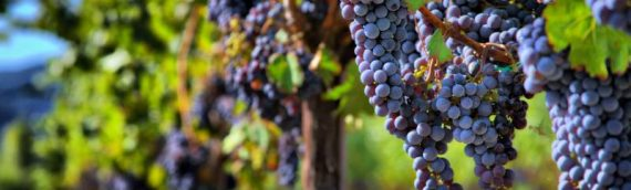 July Wine Night – A Tour Of The Pinot Family!